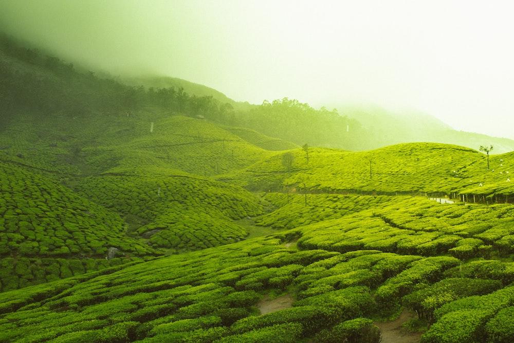 夏冬どっちがおすすめ?ルピシア福袋の中身ネタバレと最新情報、お茶が無料?の会員制度を解説